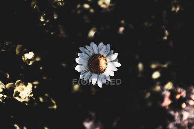 Nahaufnahme der schönen blühenden weißen Blume bei Sonnenlicht — Stockfoto