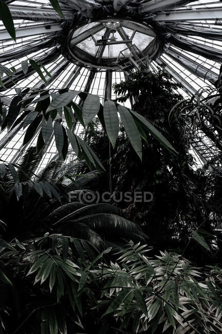 Low angle view of beautiful many green plants in greenhouse — Stock Photo