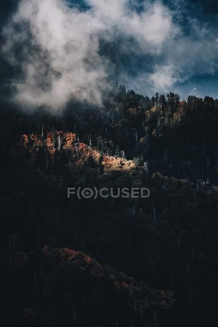 Воздушный вид тумана покрыты красивый зеленый лес в горах — стоковое фото
