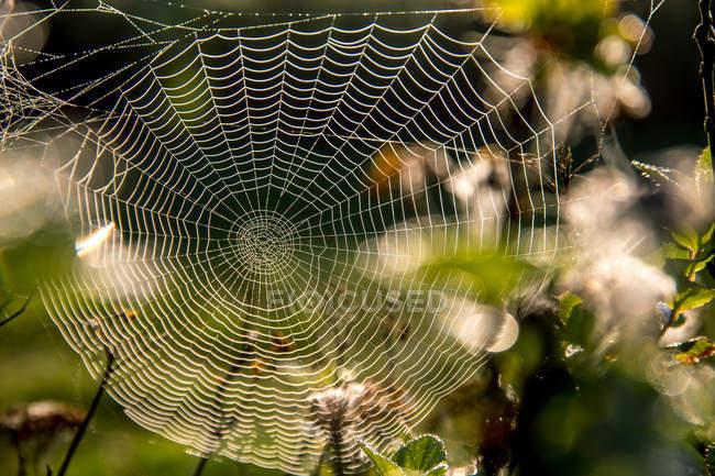 Vista de cerca de la tela de araña en el jardín en el día soleado - foto de stock