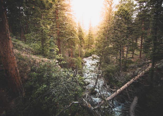 Bellissimo ruscello rapido nella foresta verde al tramonto — Foto stock