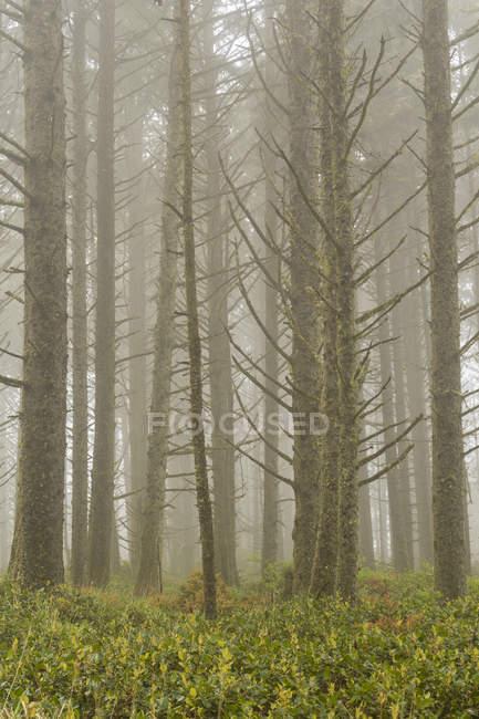 Landschaftlich reizvolle Aussicht auf hohe Bäume und grüne Vegetation im n:0 — Stockfoto