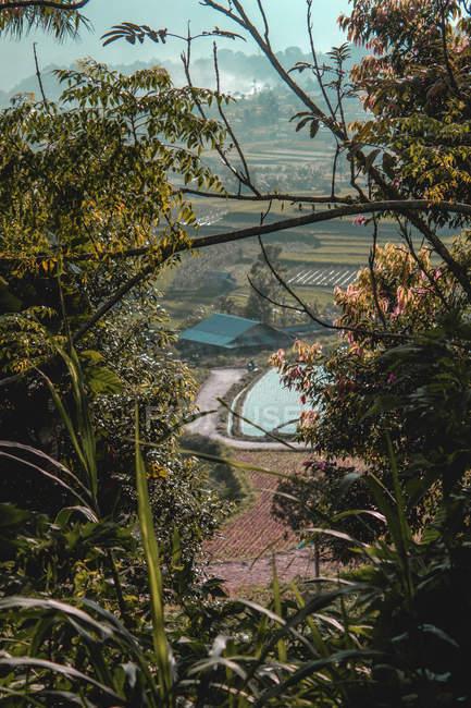 Vista attraverso rami verdi sugli alberi vicino aplarici durante il giorno — Foto stock