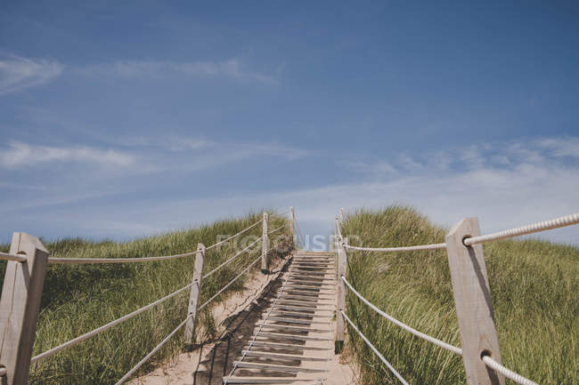 Wooden stairs leading to beach surrounded by tall grass, low angle view — Stock Photo