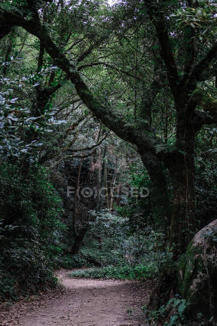 Bellissimo sentiero tortuoso attraverso verde foresta tropicale. — Foto stock