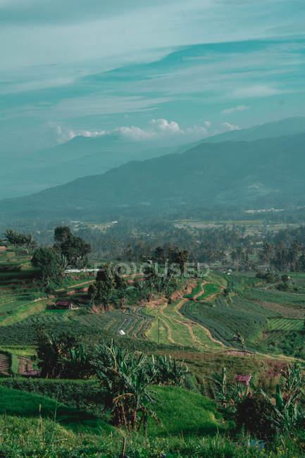 Вид с воздуха на территорию фермы с зеленой пышной растительностью — стоковое фото