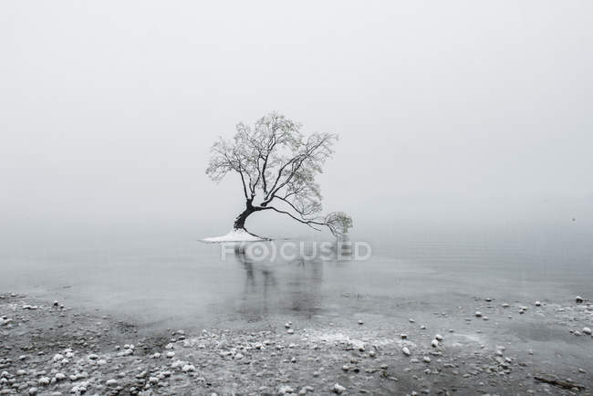 Snow-covered bare tree on body of water at wintertime — Stock Photo