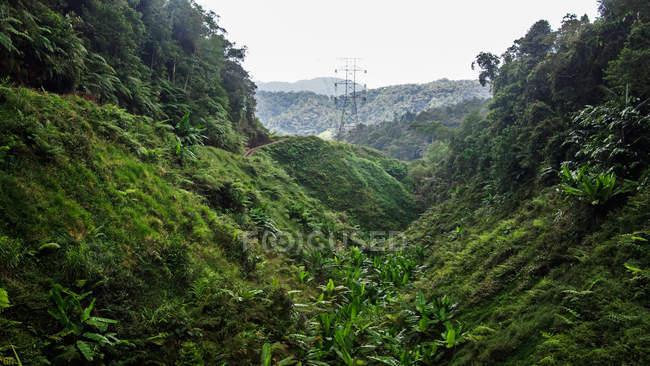 Belle montagne coperte di vegetazione verde lussureggiante durante il giorno — Foto stock