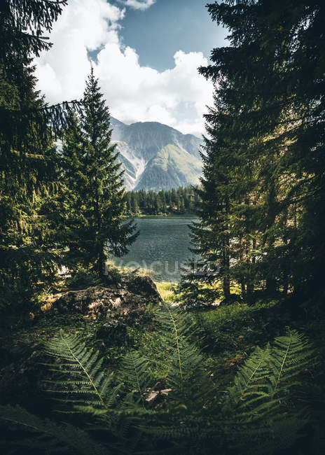 Lake surrounded with tall and green trees viewing mountains under white sky — Stock Photo