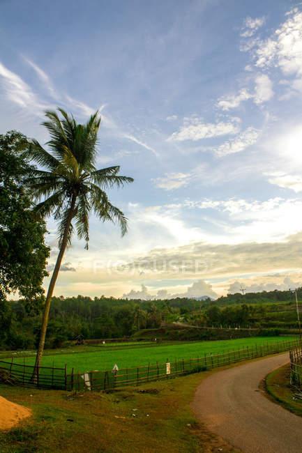 Bellissimo albero di cocco vicino campo verde durante il giorno — Foto stock