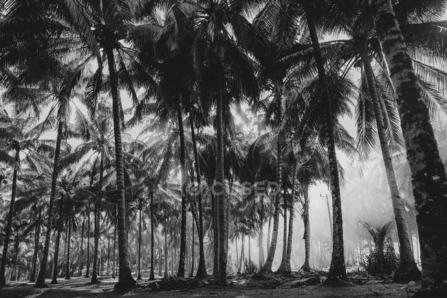 Grayscale photography of coconut trees during daytime — Stock Photo