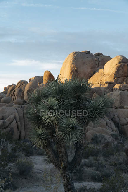 Palm plant and scenic rocky mountains in desert — Stock Photo