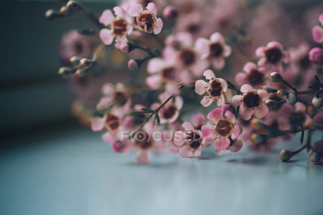 Pink petaled flowers blooming during daytime, close-up photography — Stock Photo