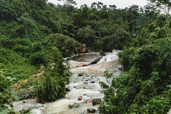 Vista ad angolo alto di bel fiume rapido e vegetazione verde in natura selvaggia — Foto stock
