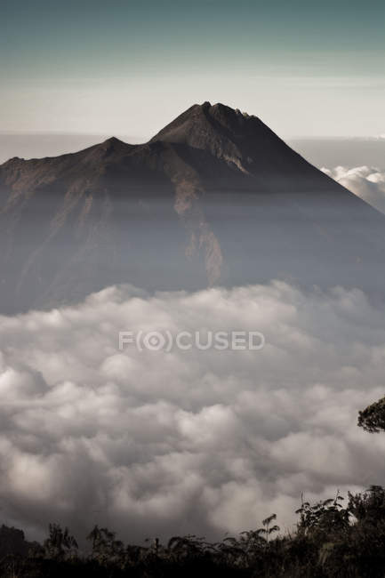 Top of the mountain and some Treetops rising above the cloud layer — Stock Photo