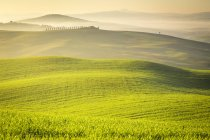 Campagne, San Quirico d'Orcia campagne, Val d'Orcia, Toscane, Italie, Europe — Photo de stock