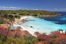 Spiaggia di Cala Ponzesi, Cala Sabina, Isola dell'Asinara, Porto Torres, Sardegna, Italia, Europa — Foto stock