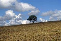 Paisagem rural perto da aldeia de Treia, Marche, Itália, Europa — Fotografia de Stock
