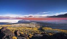 Laguna Colorada, Reserva Nacional Fauna Andina Eduardo Avaroa, Lipez Meridional, Potos, Uyuni, Bolivia, Sudamérica - foto de stock