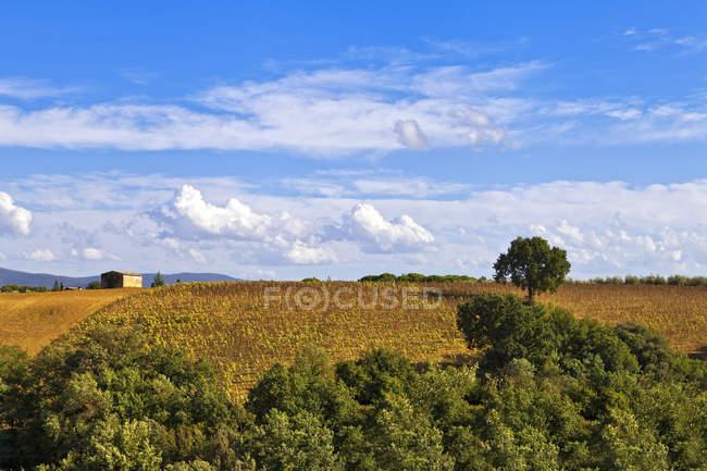 Деревня вокруг Colle Val dElsa, Тоскана, Италия, Европа — стоковое фото