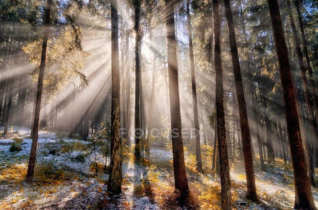 Sun rays in forest, Non Valley, Trentino-Alto Adige, Italy — Stock Photo