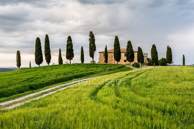 A lonely farmhouse with cypress trees standing in line in foreground Val d'Orcia, Tuscany, Italy — Fotografia de Stock