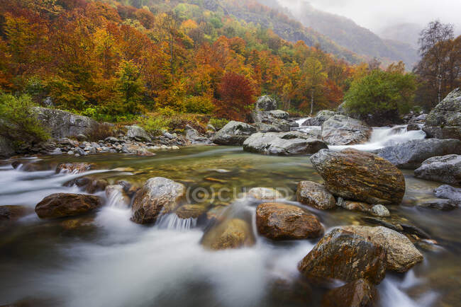 Autumnal colors in the Gesso Valley, Alpi Marittime Natural Park, Gesso Valley, Piedmont, Italy — Stock Photo