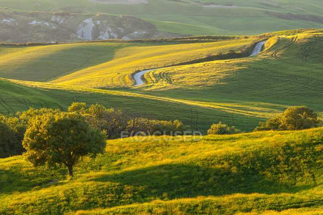 A white road among wheat fields in the val d'Orcia's hills at sunset with a tree in foreground, Pienza, UNESCO World Heritage Site, Val d'Orcia (Orcia Valley), Tuscany, Italy, Europe — Stock Photo