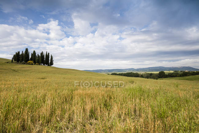 Clouds frame the gentle green hills of Val d'Orcia, Orcia Valley (Val d'Orcia), UNESCO World Heritage Site, Tuscany, Italy, Europe — Stock Photo