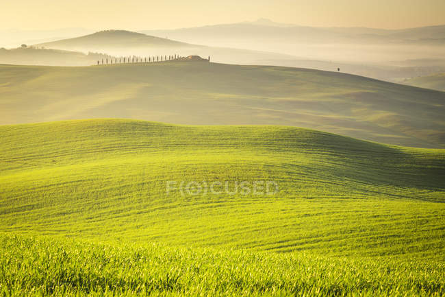 Countryside, San Quirico d 'Orcia countryside, Val d' Orcia, Tuscany, Italy, Europe — стоковое фото