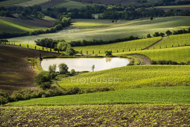 Countryside, Landscape, Urbisaglia, Marche, Italy, Europe — Stock Photo