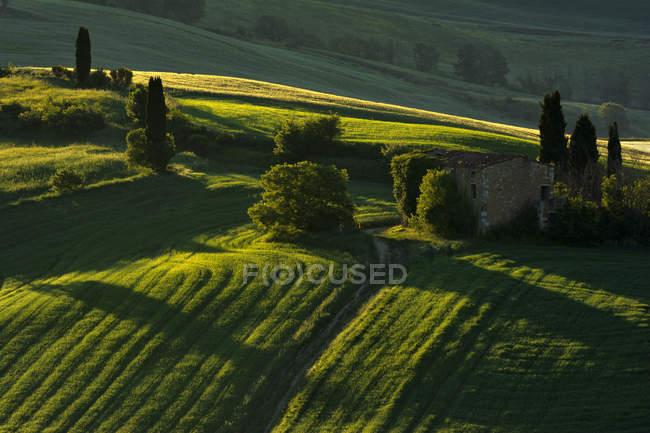 Green details, Val d 'Orcia, Tuscany, Italy — стоковое фото
