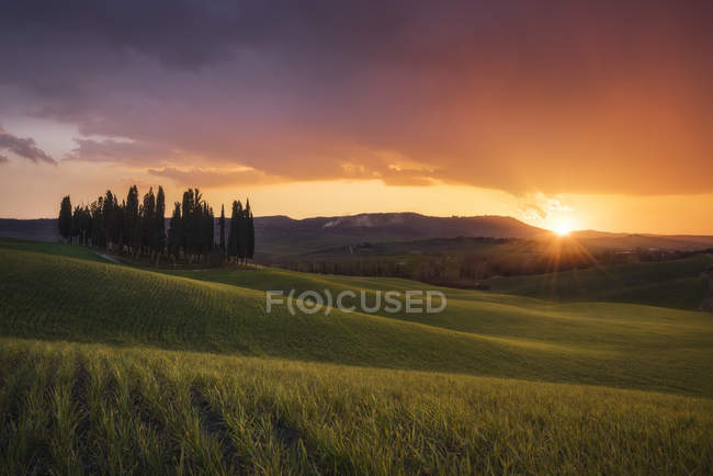 Countryside, San Quirico d 'Orcia, Val d' Orcia, Tuscany, Italy, Europe — стоковое фото