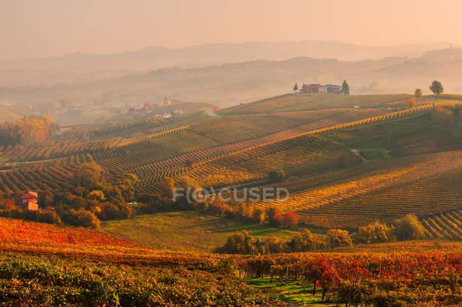 Barolo hils at sunset, Barolo, Piemonte, Itália, Europa — Fotografia de Stock