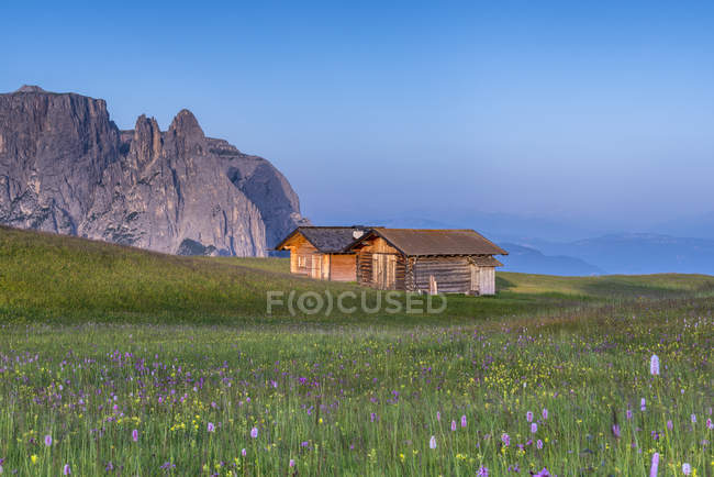 Alpe di Siusi/Seiser Alm, Dolomites, Alto Adige, Italie, Europe. Bloom sur le Plateau de Bullaccia/Puflatsch. En arrière-plan, les sommets de Sciliar/Schlern — Photo de stock