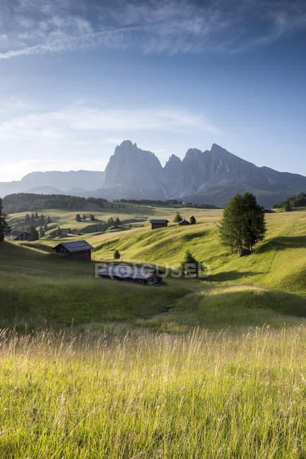 Alpe di Siusi/Seiser Alm, Dolomites, Alto Adige, Italy, Europa. Paisagem do verão no Alpe di Siusi/Seiser Alm com os picos de Sassolungo/Langkofel e Sassopiatto/Plattkofel — Fotografia de Stock