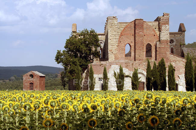 Аббатство Сан-Галгано, Кьюсдино, Тоскана, Италия — стоковое фото