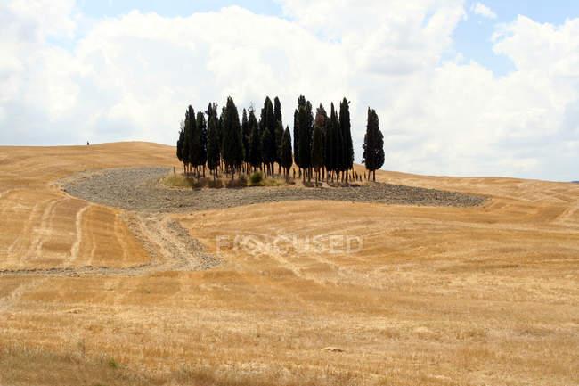 Сельская местность, Сиена, Тоскана, Италия — стоковое фото