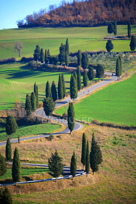 Montichiello, Cypress trees line a winding country road outside the village of Montichiello in Val d 'Orcia, Tuscany, Italy, Europe — стоковое фото