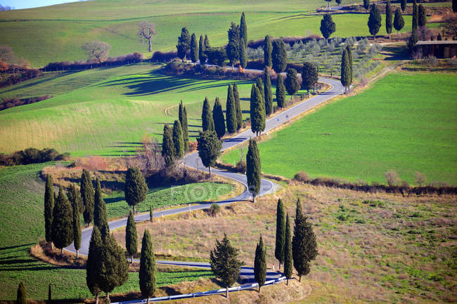 Montichiello, cypress trees line a winding country road outside the village of Montichiello in Val d'Orcia, Tuscany, Italy, Europe — Stock Photo