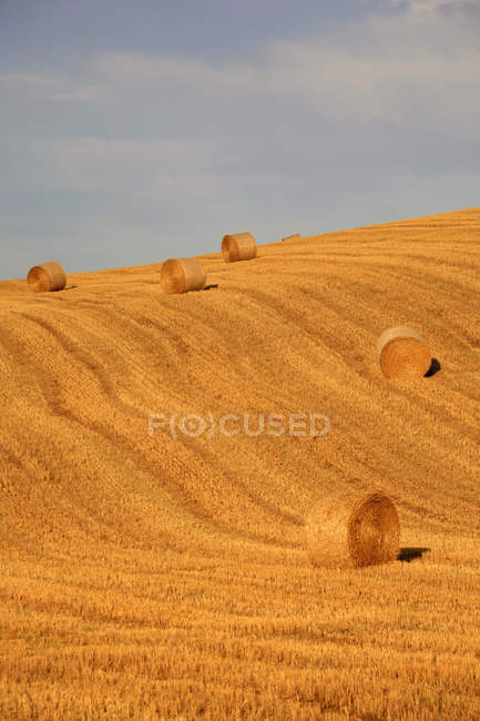 Валь-Д'орчія, Сієна, Тоскана, Європа — стокове фото