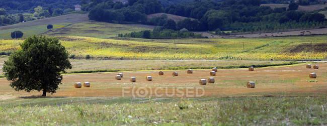 Сиена сельская местность, Тоскана, Италия, Европа — стоковое фото