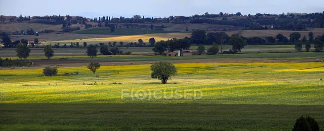 Siena rural, Toscana, Itália, Europa — Fotografia de Stock