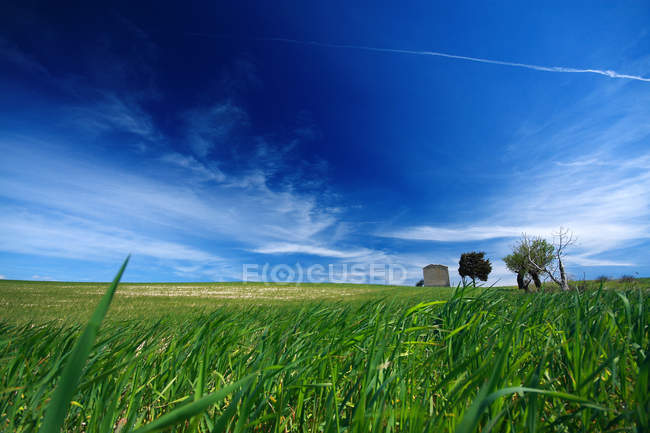 Contryside  landscape, Serdiana, Sardinia, Italy — Stock Photo