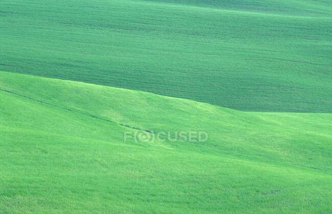 Countryside with green field, Umbria, Italy — Stock Photo