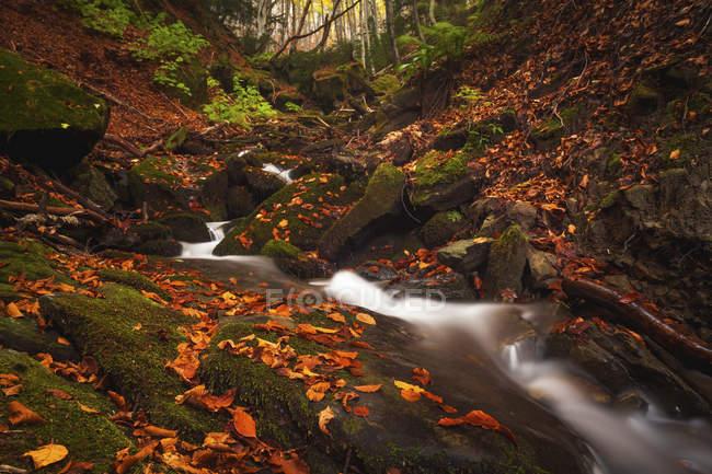 Algunas pequeñas caídas en el bosque en Bosco della Morricana, Ceppo, Abruzos, Italia, Europa - foto de stock