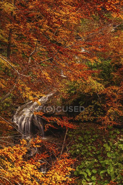View of Morricana Falls in the forest of Bosco della Morricana wood arounded by an autumn theme in Ceppo, Abruzzo, Italy, Europe — Stock Photo