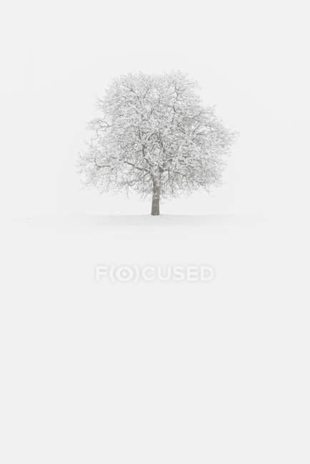 Arbres enneigés après une forte chute de neige, Non vallée, Trentin-Haut-Adige, Italie — Photo de stock