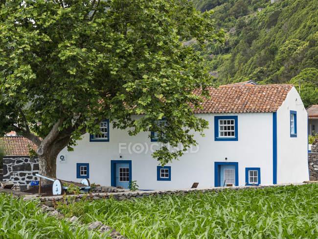 Faja dos Vimes. Isola di Sao Jorge, un'isola delle Azzorre (Ilhas dos Acores) nell'oceano Atlantico. Le Azzorre sono una regione autonoma del Portogallo. Europa, Portogallo, Azzorre — Foto stock