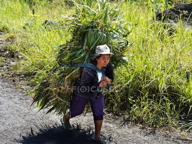 Farmer who returns on foot with the harvest, Gunung Merapi, Taman National Park, Yogyakarta, Jawa, Indonesia , Asia — Stock Photo